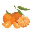 cartoon a mandarin vector image