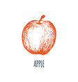 hand drawn apple on white background vector image vector image