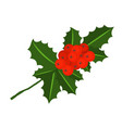holly berry branch for christmas wreath and vector image vector image