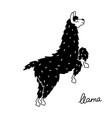 cute llama vector image vector image
