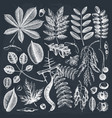 hand sketched autumn leaves collection on vector image vector image