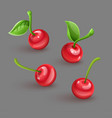 red cherry berries with green vector image