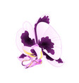 orchid with spots purple and white flower vector image vector image