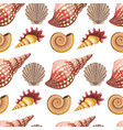 seashell and conch sealife animals mollusks vector image vector image