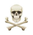 skull crossbones isolated vector image vector image