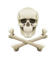 skull crossbones isolated vector image