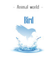 animal world bird blue bird droplet background vec vector image vector image
