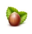 Full Unpeeled Hazelnut with Leaves on Background vector image vector image