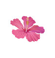 pink hibiscus flower exotic plant vector image