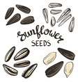 Set of Sunflower seeds with Vintage Stylized vector image vector image