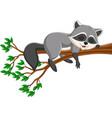 cartoon raccoon sleeping on tree branch vector image vector image