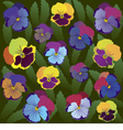 Colored pansy flowers on background of leaves vector image vector image