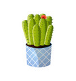 moon green cactus with red flower in striped pot vector image