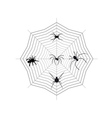 Spiders on a spider web vector image vector image
