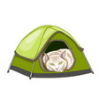 white domestic cat in the tent vector image