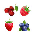 berries strawberry raspberry blueberries cherry vector image vector image