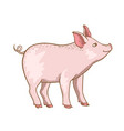 cute pink little pig vector image
