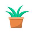 green aloe plant in clay pot vector image
