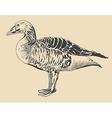 ink drawing of bird duck Anser anser vector image