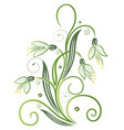 spring time snowdrops vector image vector image