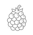 blackberry line icon vector image