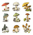 mushroom set hand drawn engraved vintage organic vector image vector image