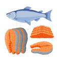 salmon seafood fresh fish orange fillet vector image vector image