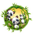 three little panda are playing together vector image