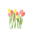 yellow and pink tulips growing in flowerbed on vector image