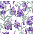 seamless pattern with hand drawn lavender vector image