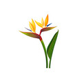 beautiful bird of paradise flowers exotic plant vector image vector image
