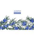 horizontal background with juniper needle-like vector image