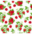 raspberries fresh red berries and leaves isolated vector image