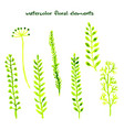 set different watercolor hand drawn herbs vector image