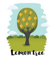 small lemon tree with flowers vector image