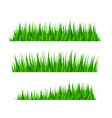 grass herb fodder nature green decor set vector image
