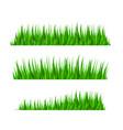 grass herb fodder nature green decor set vector image