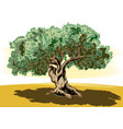 old olive tree and tortuous vector image vector image
