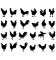 silhouettes roosters and hens vector image vector image