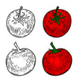 tomato hand drawn design element for poster card vector image