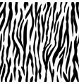 animal background zebra texture mammals fur vector image vector image