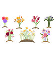 forest flowers garden spring floral planting vector image vector image