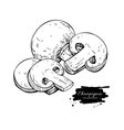Champignon mushroom hand drawn vector image vector image