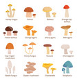 forests mushrooms set in vector image