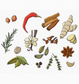 set spices vector image vector image