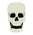 skull human skeleton cartoon isolated symbol vector image vector image