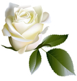 White realistic rose flower and leaves vector image vector image