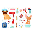 accessories for care and dogs vector image vector image