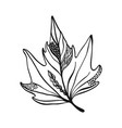 hand drawn leaf vector image vector image