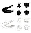 kangaroos llama monkey panther realistic vector image vector image